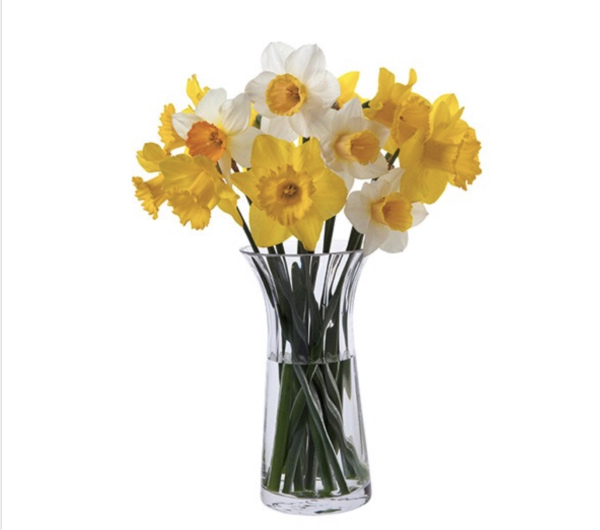 Daffodils 🌼