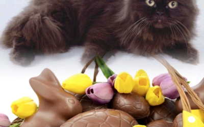 🐰 Chocolate Easter! 🐥