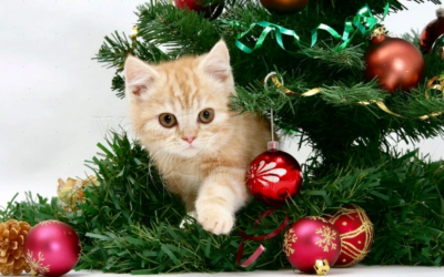 🐾🌲Top Tips for Xmas Cats!!!🎅 🐾